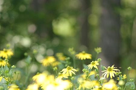 flower0508