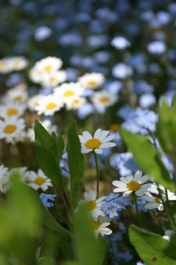 miniflower